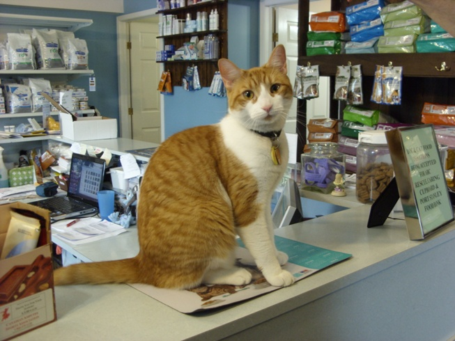 Chino the clinic cat